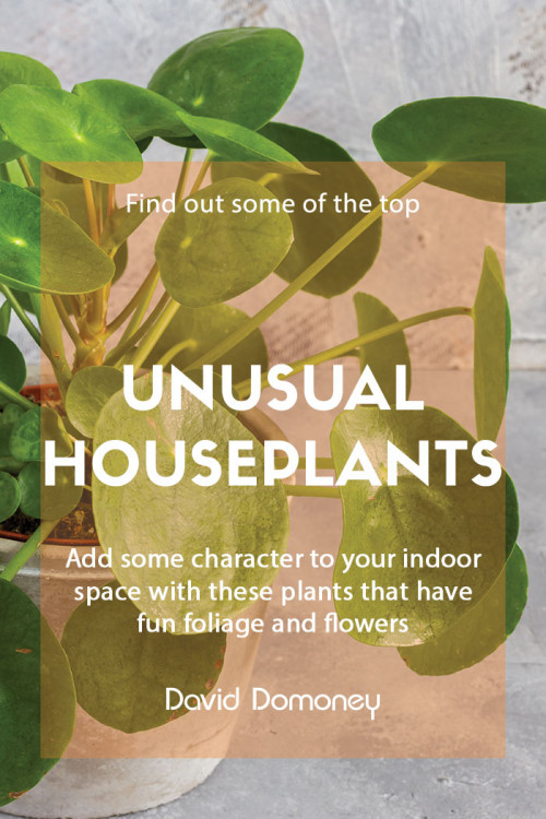 Unusual houseplants for your home
