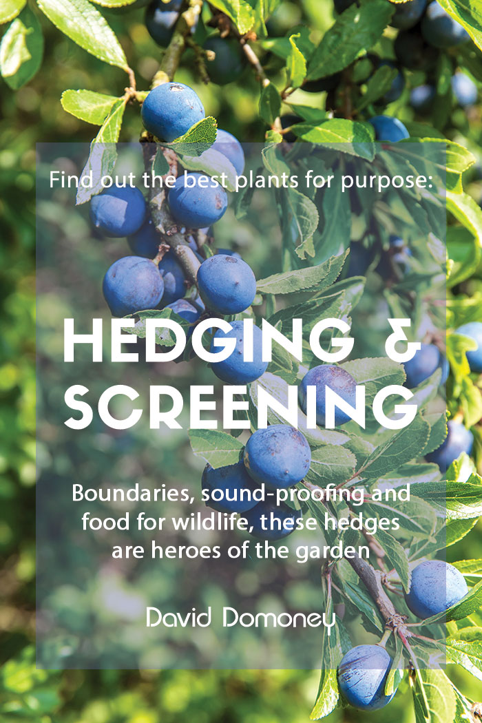 Plants for purpose hedging and screening