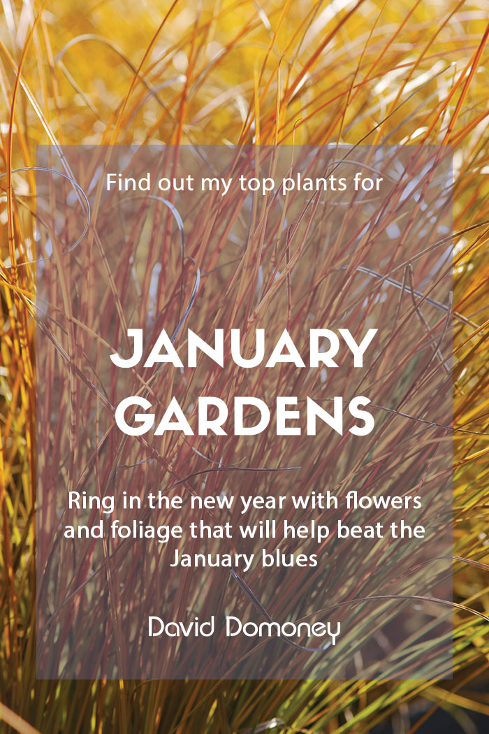 Top ten plants for January gardens