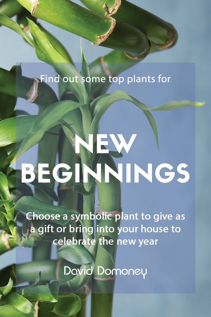 Top plants for new beginnings