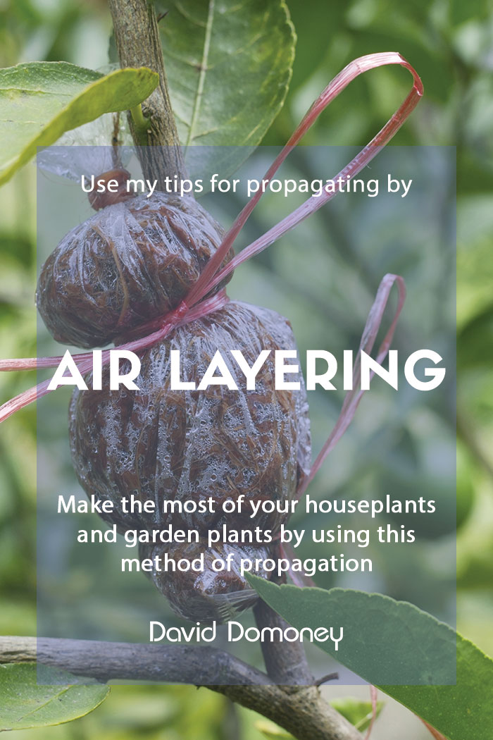 Propagate your houseplants by air layering