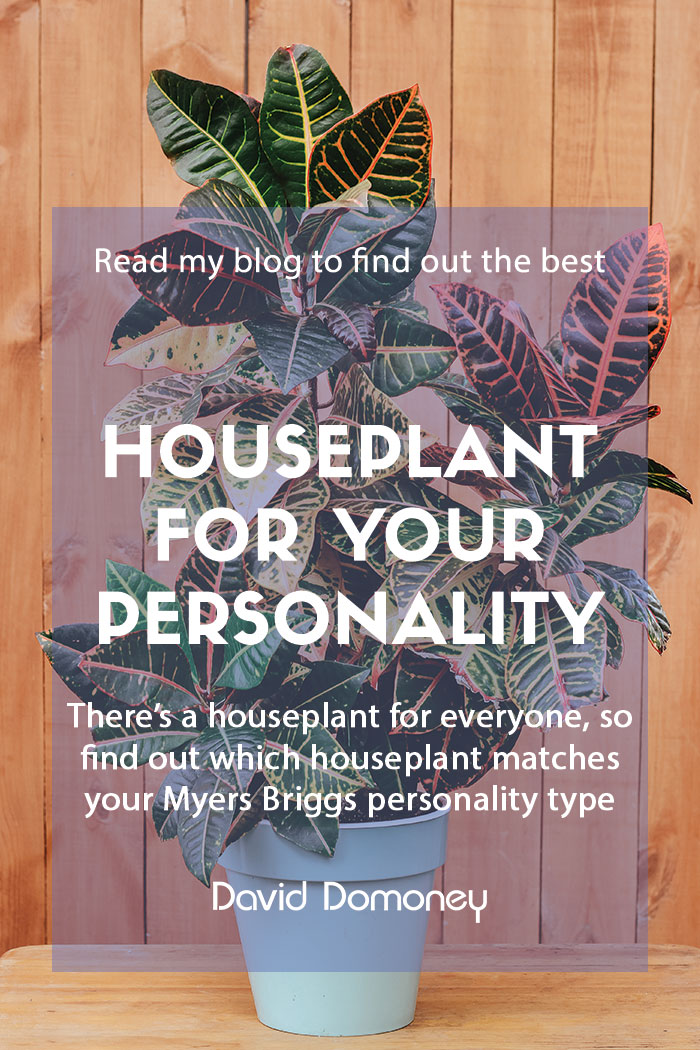 Houseplant to fit your Myers Briggs personality type