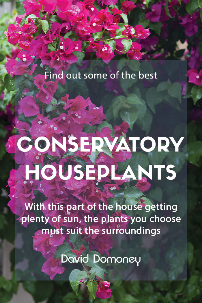 Houseplants to grow in your conservatory