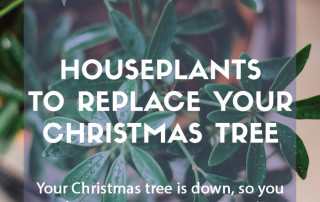 Houseplants to replace your Christmas tree