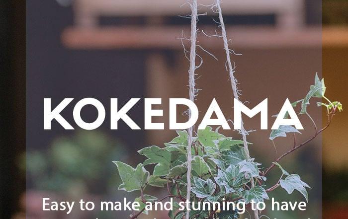 Make your own kokedama