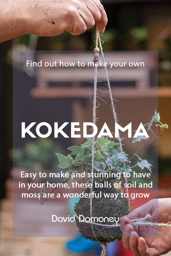Make your own kokedama