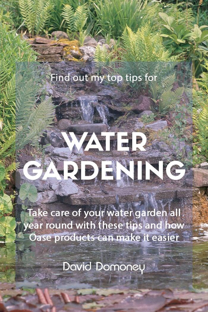 Oase water gardening tips