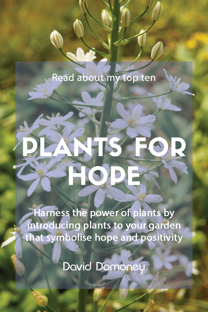 Plants that symbolise hope for your garden