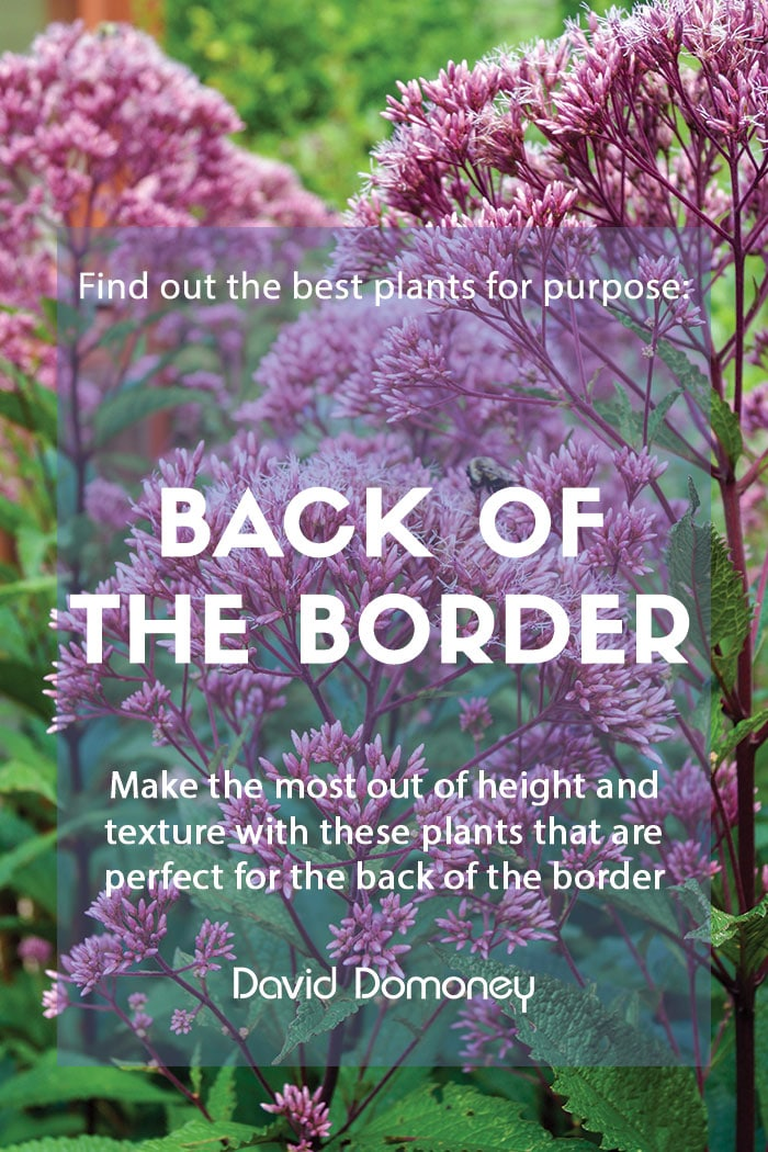 Plants for purpose - Plants for the back of the border