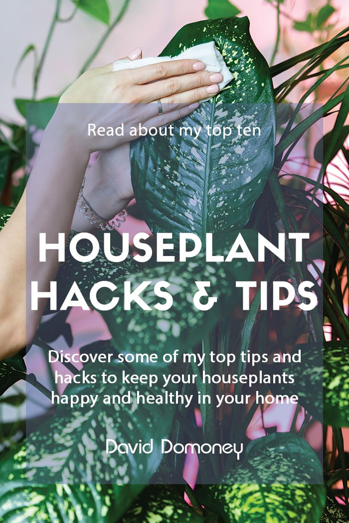 Top ten houseplant hacks and tips everyone should know