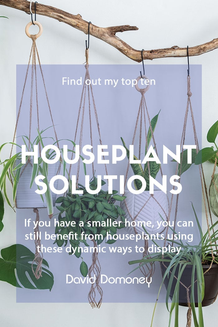 Top ten houseplant solutions for small spaces
