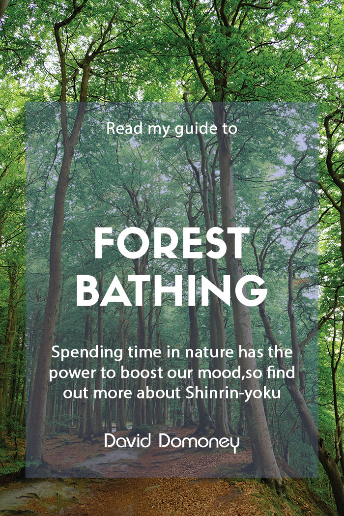 A guide to forest bathing or Shinrin-yoku
