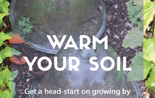 Top job for March - Ways to warm your soil