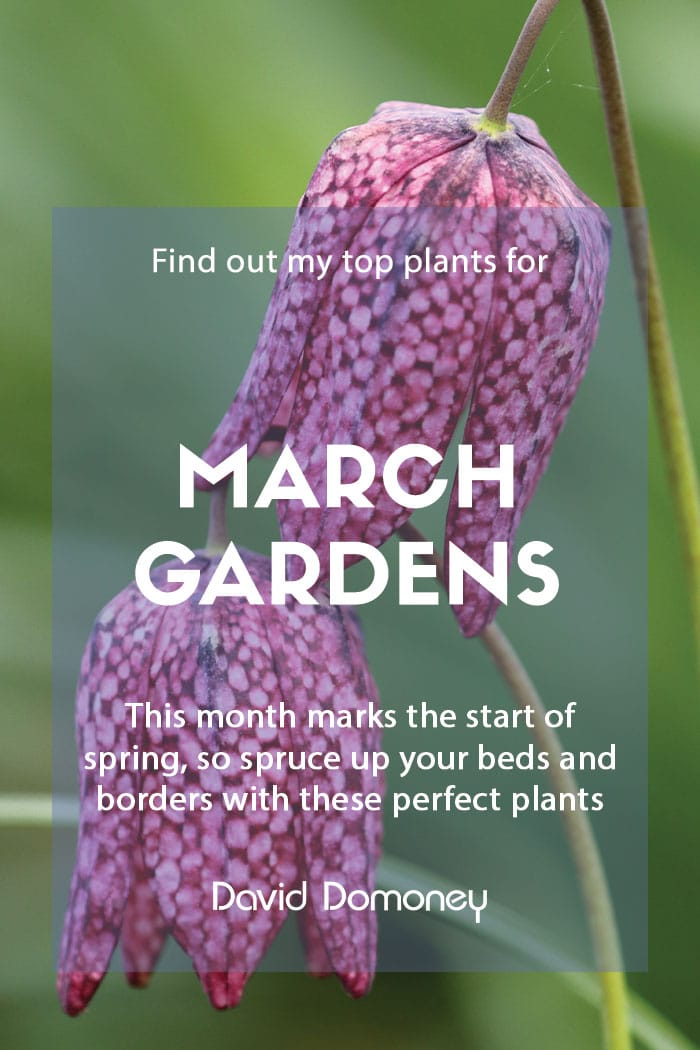 Top ten plants for March gardens