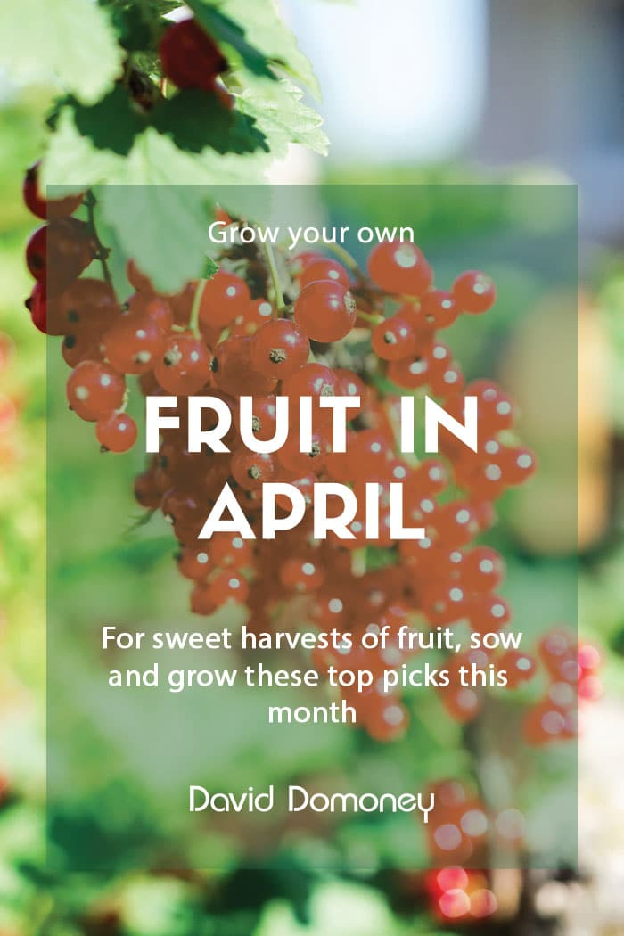 Grow your own fruit in April