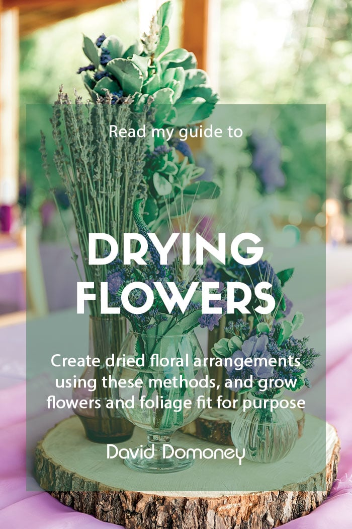 How to dry flowers and foliage