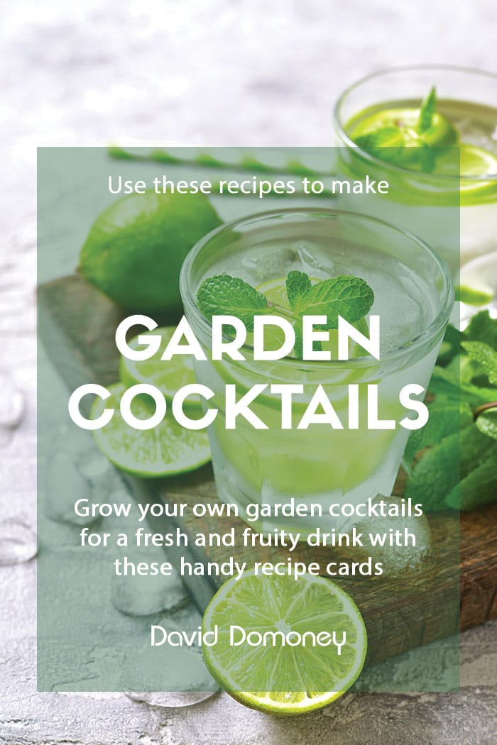 Recipe Garden cocktail feature