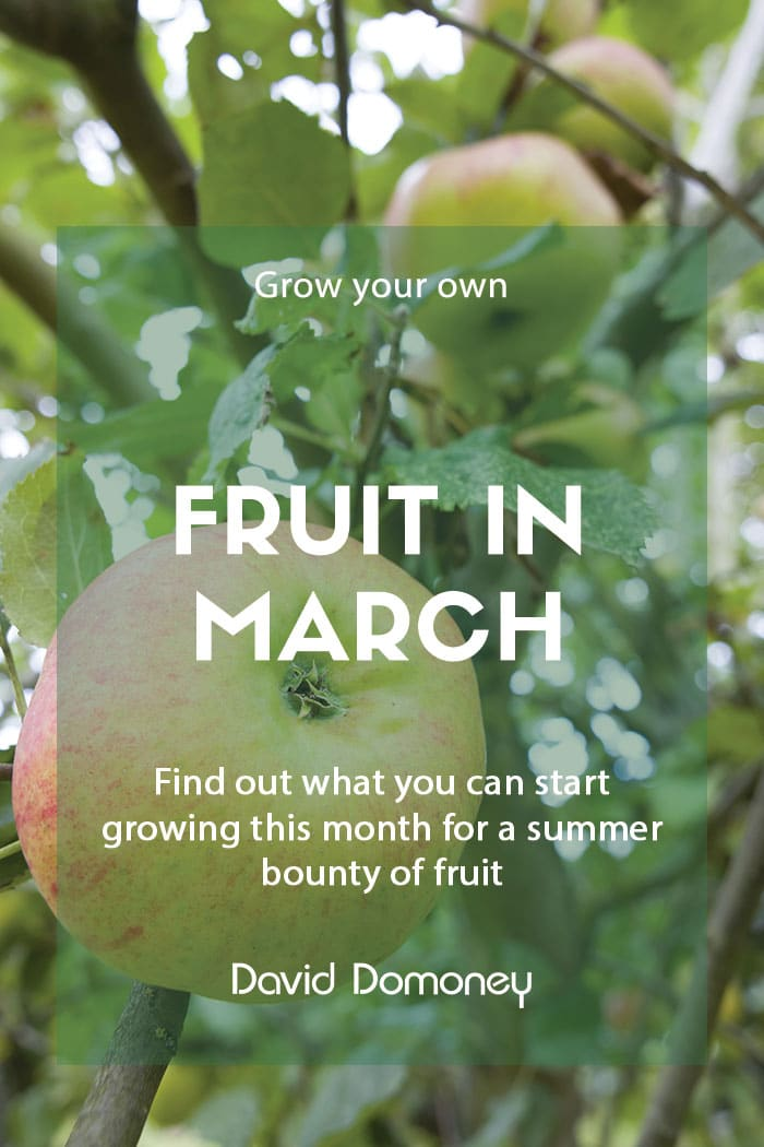 Top grow your own fruit for March
