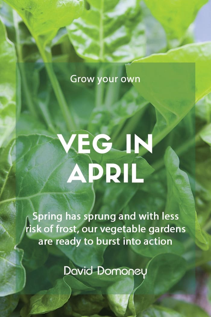 Top grow your own veg for April