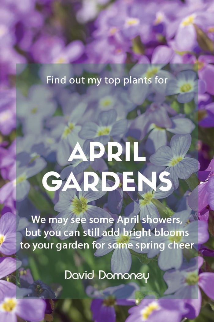Top ten plants for April gardens