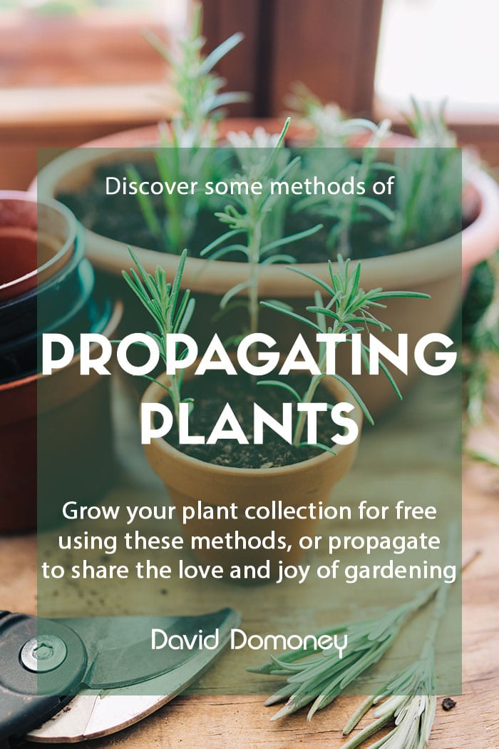 Ways to propagate plants in the home and garden