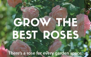 How to grow the best roses in your garden