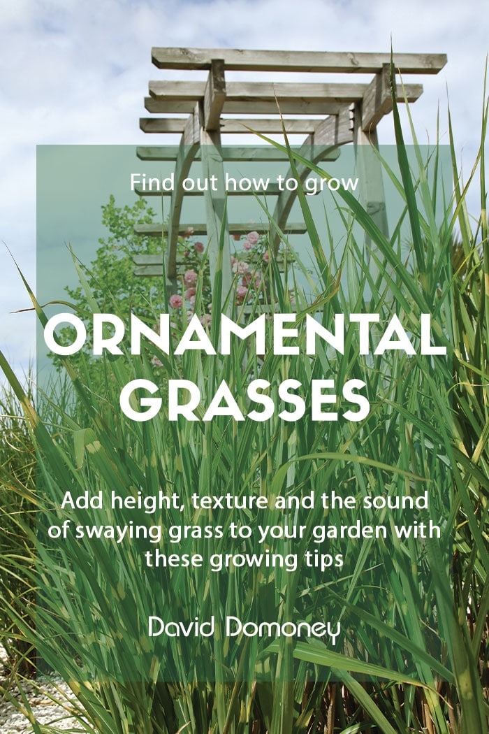 How to grow ornamental grasses