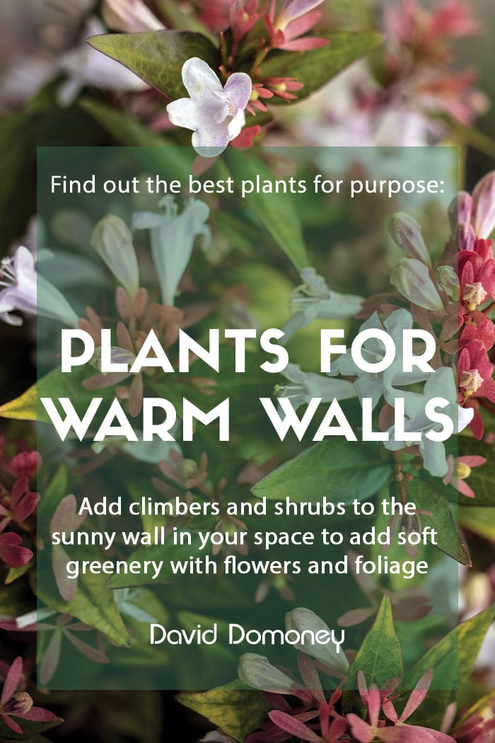 Plants for purpose Shrubs and climbers for warm walls