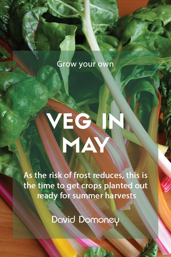Top GYO veg to grow in May