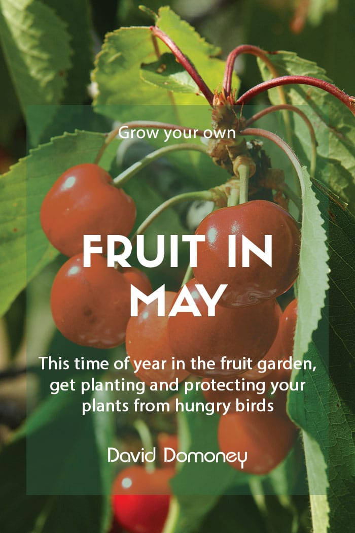 Top grow your own fruit in May