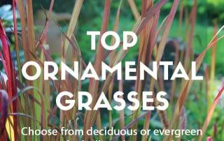 Top ten ornamental grasses