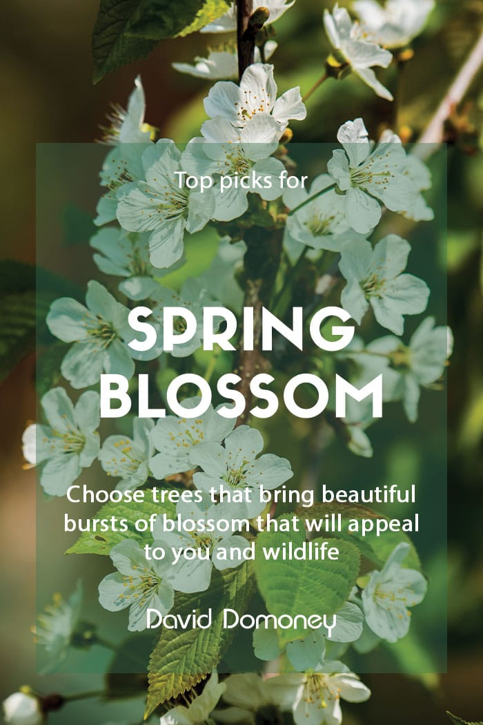 Top picks for spring blossom