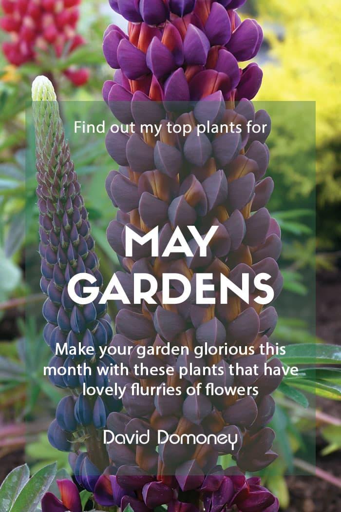 Top ten plants for May gardens