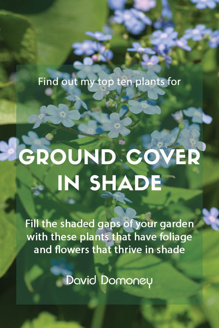Top ten plants for ground cover in shade
