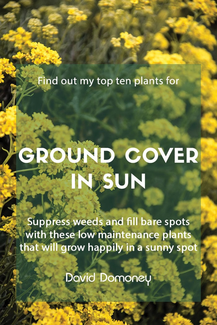 Top ten plants for ground cover in sun