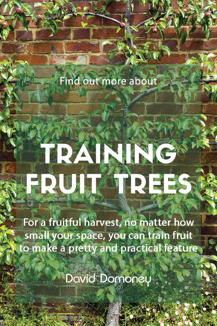 Grow your own by training fruit trees at home
