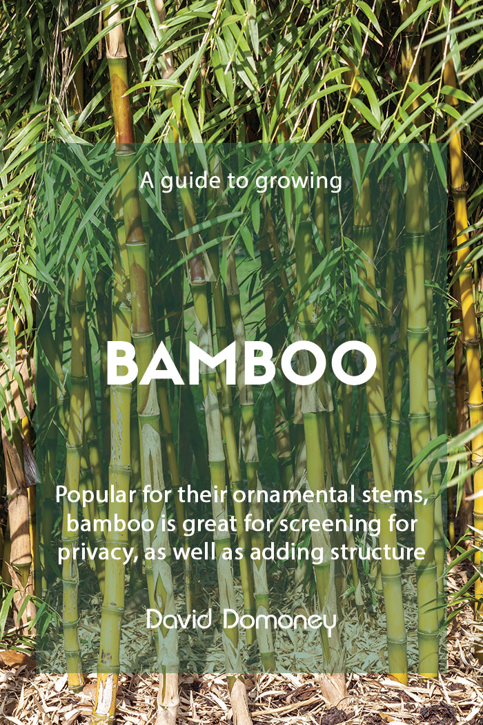 A guide to growing bamboo in the garden