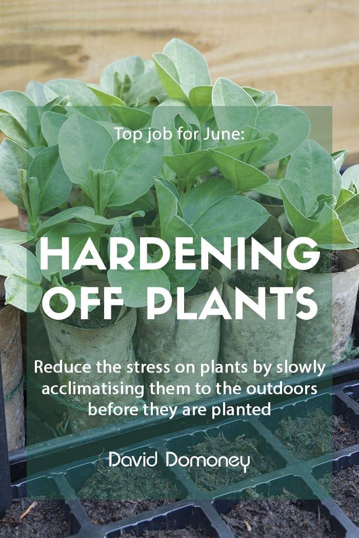 Top job for June - Hardening off plants
