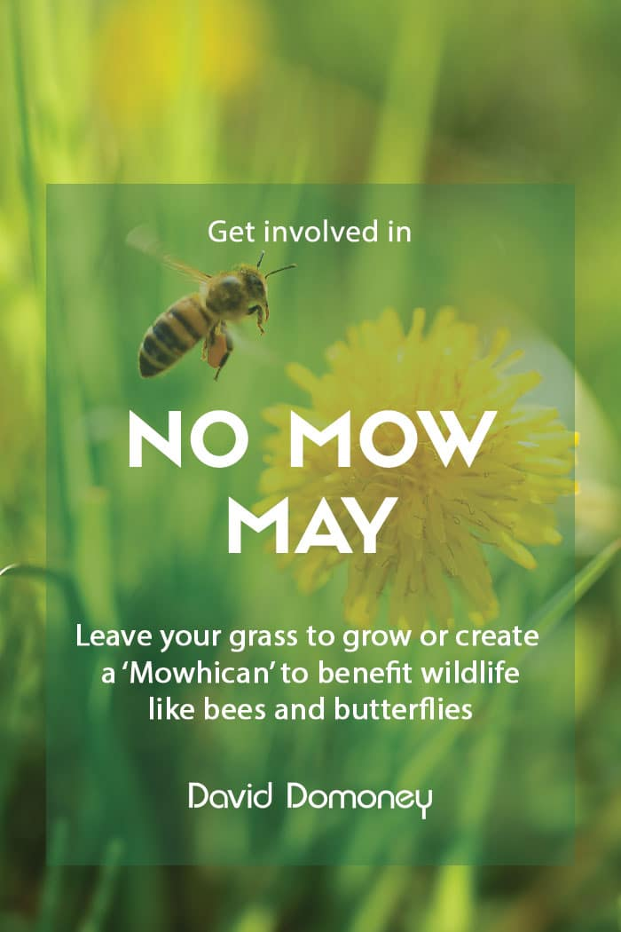No Mow May for wildlife