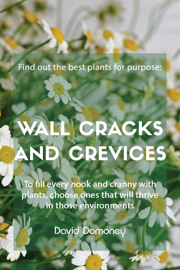 Plants for purpose - Plants for wall cracks and crevices