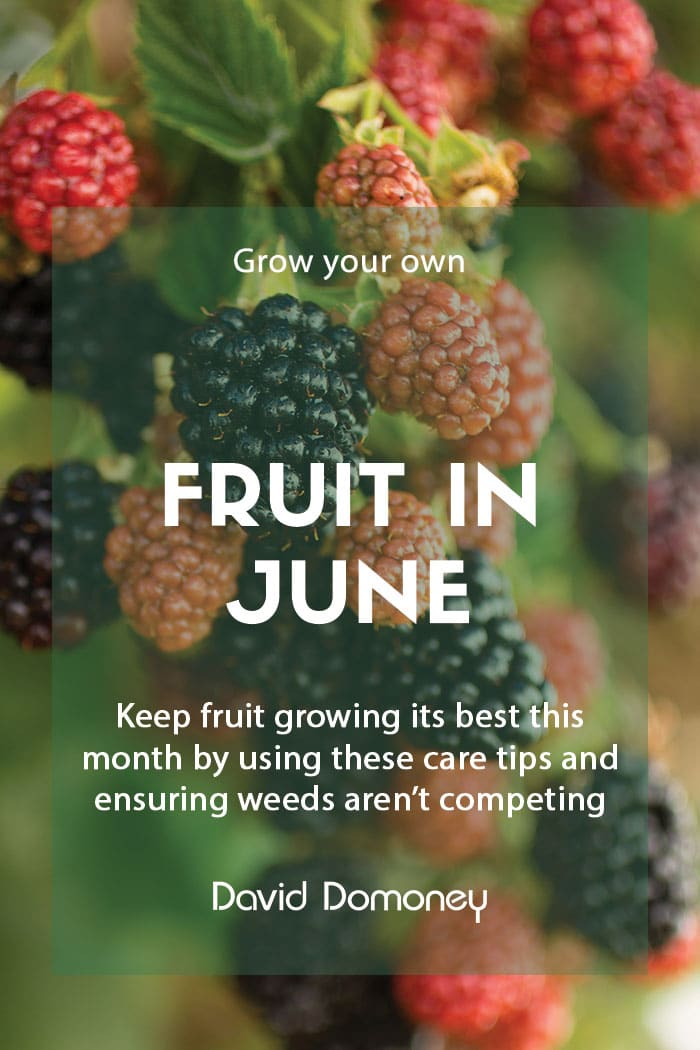 Grow your own fruit in June feature