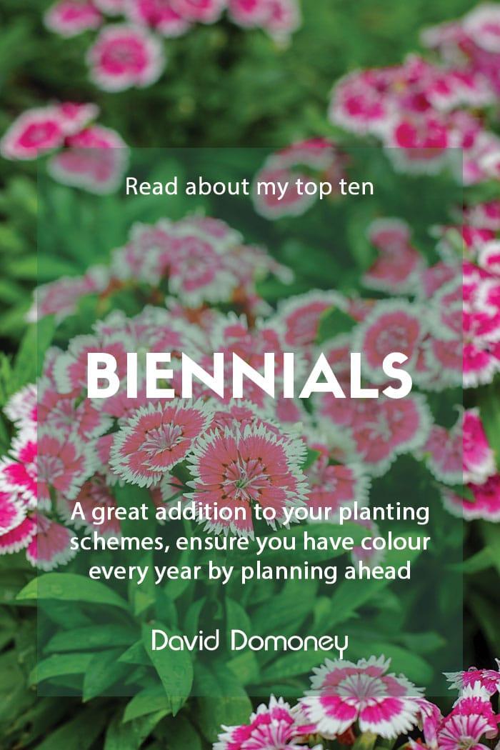 Top ten biennials to grow in your garden