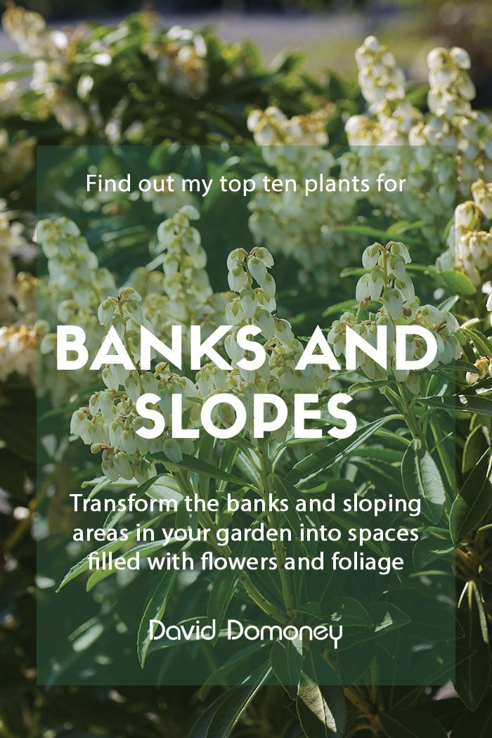 Top ten plants for banks and slopes