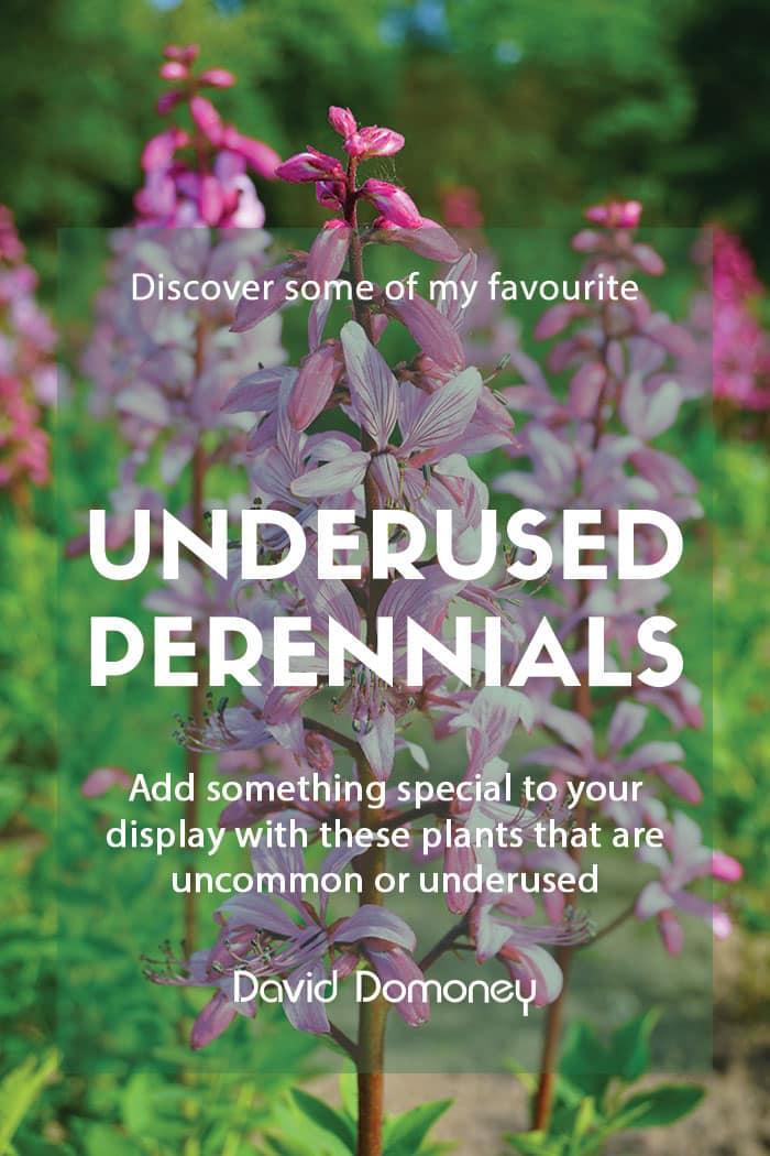 Top underused or uncommon perennials