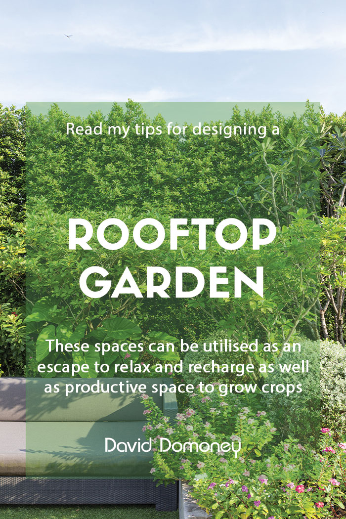 Designing a rooftop garden