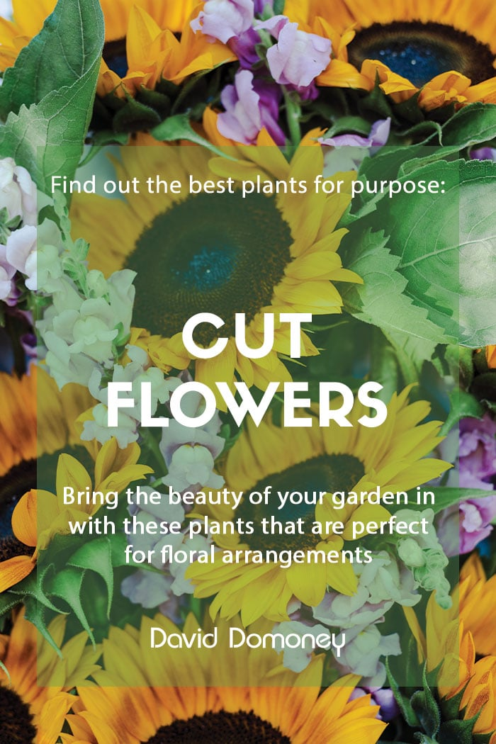 Plants for purpose - Top plants for cut flowers