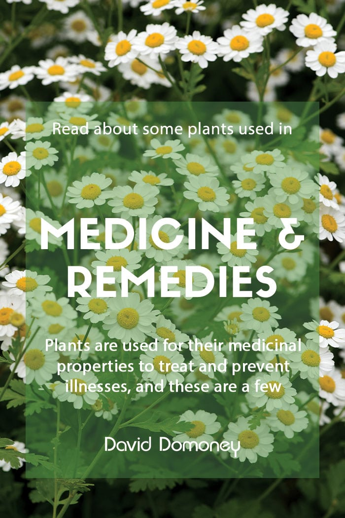 Plants used in drugs medicines and remedies