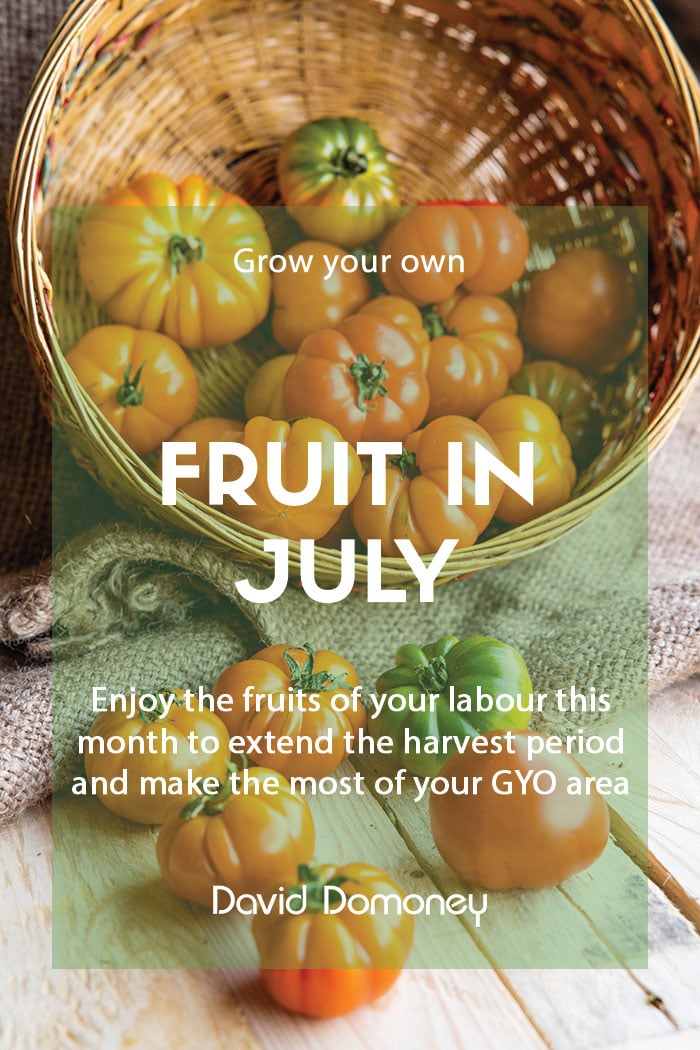 Top grow your own fruit for July
