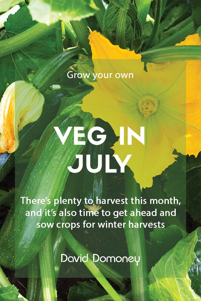 Top grow your own veg for July