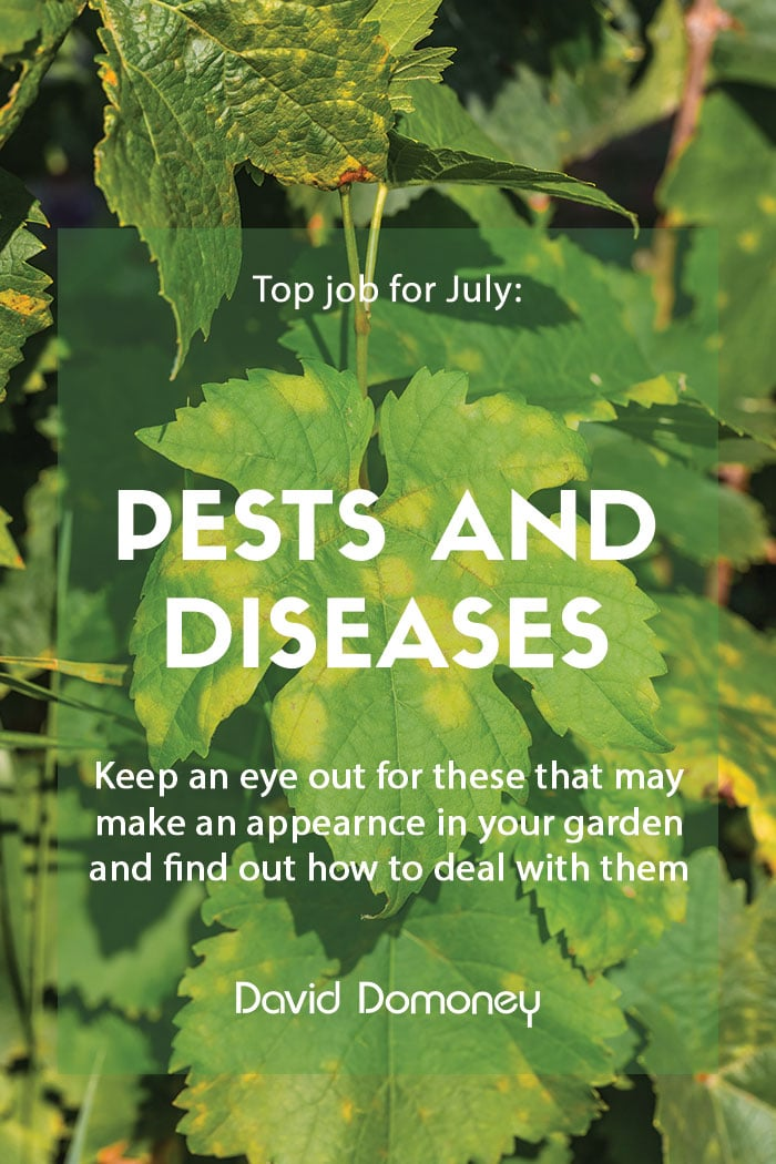 Top job for July - Pest and disease watch